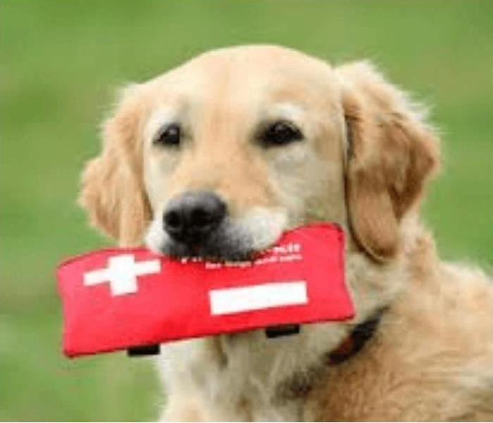 A golden retriever holds a first aid kit in its mouth